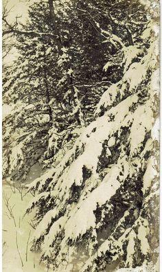 Photographer:  Wayne Putnam Snowy Trees taken Bassett, Nebraska
