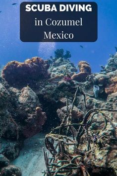 SCUBA DIVING in Cozumel Mexico