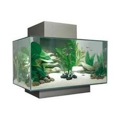 Fluval Edge Aquarium I Wouldn T Suggest The For Goldfish Because Eventually Grow Fairly Large Perfect Guppies And Other