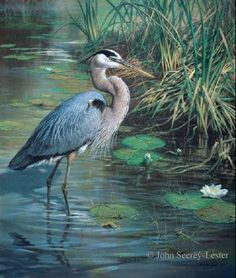 John Seerey-Lester - Lone Fisherman - Great Blue Heron - This is one of more than works of art offered by ArtUSA, The World's Source for Collectible Art. Wildlife Paintings, Wildlife Art, Animal Paintings, Vogel Illustration, Bird Drawings, Horse Drawings, Blue Heron, Bird Prints, Bird Art