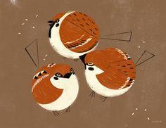 Chicken, Java sparrows, Tree sparrows.