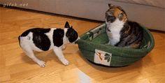 Funny dog & cat