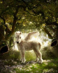Where the Winged Things Are By pikkatze ~ Baby Pegasus Unicorn Fantasy, Unicorn Horse, Unicorn Art, Baby Unicorn, Unicorn Pictures, Baby Animals Pictures, Cute Baby Animals, Elfen Fantasy, Fantasy Art