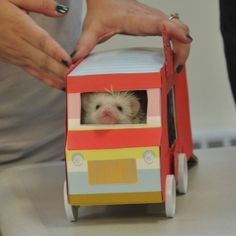 The bus driver - Cutest Paw Cute Little Animals, Adorable Animals, Cute Hedgehog, Cute Photography, Little Critter, Bus Driver, Clean Up, Pretty Cool, Smiley