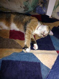 Sleeping in the kotatsu