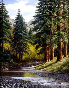 Coast Redwoods by Tom Rissacher, Oil, Giclee Prints Available