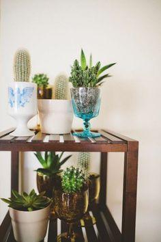 Cactus | theglitterguide.com
