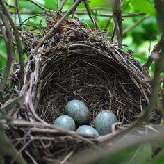 How I love Rattling On's beautiful blackbird photos.