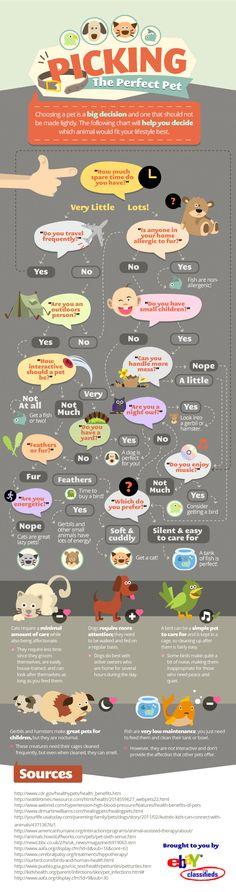 Eligiendo la mascota perfecta - Picking the Perfect Pet - Infographic - Dogs included