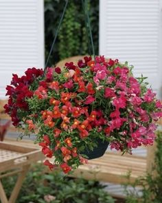 The FIRST EVER trailing snapdragon from seed, Candy Showers is beautiful as a single color or as a mix of colors in hanging baskets and mixed containers.