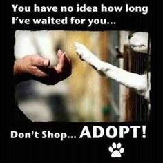 So sad. I want to adopt them all!