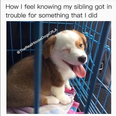 Dog Memes That Will Cure Your Bad Day - 8