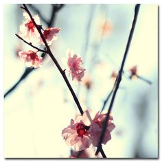 """Found it at Wayfair Supply - """"My Spring"""" by Beata Czyzowska Young Photographic Print on Wrapped Canvas"""