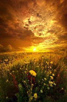 ~~And In A Whispered Moment She Was Gone | golden flower field landscape, Somers, Wisconsin | by Phil Koch~~