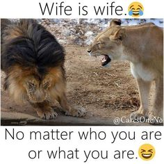 25 Lion Memes That Will Make You Feel Like a King - World's largest collection of cat memes and other animals Funny Animal Jokes, Cute Funny Animals, Funny Animal Pictures, Animal Memes, Funny Cats, Crazy Funny Memes, Really Funny Memes, Funny Relatable Memes, Haha Funny