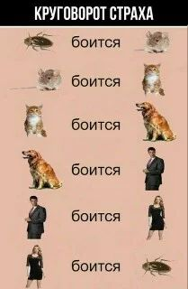Фотография New Funny Jokes, Stupid Memes, Funny Quotes, Funny Relationship Jokes, Anime Mems, Russian Memes, Flat Twist, Life Motivation, Man Humor