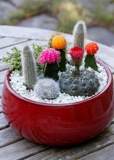 Trade the traditional bouquet for a colorful desktop cactus garden >> http://www.hgtvgardens.com/crafts/make-a-cactus-dish-garden?soc=pinterest