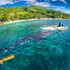 - Oslob Whale Shark Watching - Philippines Picture by @pinoytravelfreak Seen on @wonderful_places by oceanlifedaily