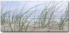 Seagrass Panoramic Canvas