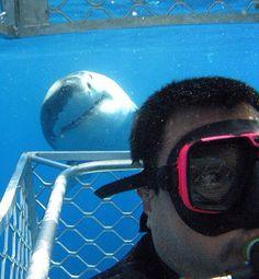Selfie Shark Photobomb HAHHA I found this so funny!!!