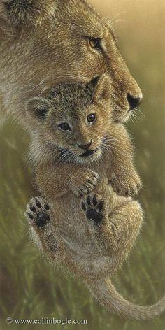 Mother's Pride - Lion Cub, Hand Signed Art Print by Collin Bogle – Collin Bogle Nature Art Wildlife Paintings, Wildlife Art, Animal Paintings, Animals And Pets, Funny Animals, Cute Animals, Wild Animals, Lion Art, Cat Art
