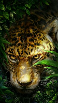Leopard hid in the shrubs! Big Cats Art, Cat Art, Wild Animals Pictures, Animal Pictures, Animal Paintings, Animal Drawings, Beautiful Cats, Animals Beautiful, Animals And Pets