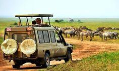 Nairobi National Park Game Drive Tour: http://nairobinationalparktours.com/nairobi-game-drive-tour.html