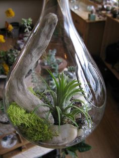 Hanging Air Plant (Tillandsia) Teardrop Terrarium. $36, via Etsy.