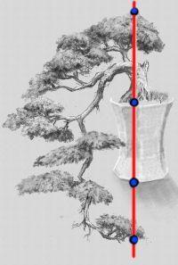 Bonsai Trees for Beginners Bonsai Pruning, Bonsai Plants, Bonsai Garden, Succulent Bonsai, Garden Trees, Bonsai Tree Care, Indoor Bonsai Tree, Mini Bonsai, Bonsai Styles