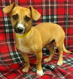 Grady is a 14-pound, 1-year-old dachshund and terrier mix male dog who gets along well with other dogs and walks well on his leash. The $200 adoption fee helps cover spay/neuter, vaccinations, microchip, vetting, food and care. Call Pets Without Partners at 243-6911. Go to www.petswithoutpartners.org. Go to www.redding.com for more adoptable pets.