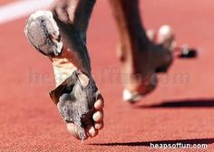 MUST Know 4 Key FAQ's for #Barefoot_Running  @  http://youtu.be/eG46lDRtLL4       Don't let your shoes get like this LOL More great  #Barefoot running tips @ http://barefootbrucy.blogspot.com/2013/07/beginners-guide-to-barefoot-running.html  Fm #BarefootBrucy