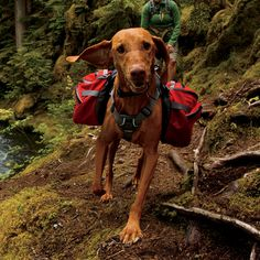Ruffwear Palisades Dog Pack another great dog hiking equipment