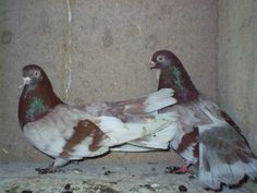 Picture 2984 Bird, Pictures, Animals, Photos, Animales, Animaux, Birds, Animal, Animais