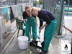 Volunteering @SANCCOB Pvc Hose, Plastic Mac, Heavy Rubber, Rain Gear, Macs, Cape Town, Blouse, Apron, Overalls