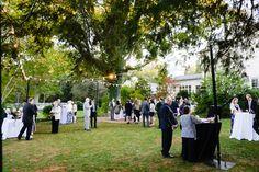 Keswick Vineyards - Blog - A Cats Wedding?????