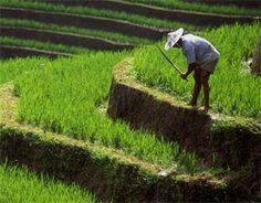 Economia verde em xeque   FarolCom