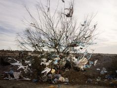 Bags caught on a tree along a desert road on the outskirts of Gafsa, Western Tunisia. 2013.