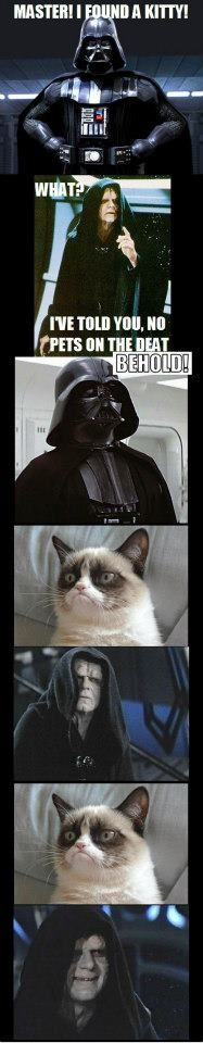 Grumpy cat and Star Wars. That would be the only pet allowed on star wars