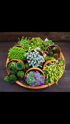 this is amazing. seven little pots on their sides in a large shallow dish.