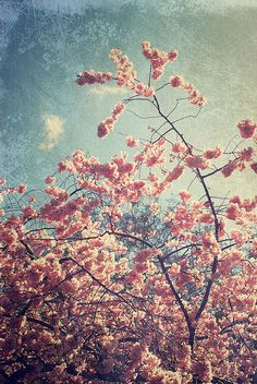 Some of my favourite moments in my life have been experienced underneath cheery blossom as the petals begin to fall. It feels like delicate drops of pick snow, dancing around me.