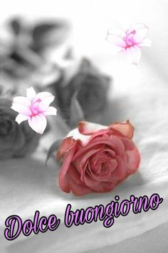Image shared by miinemost. Find images and videos about pink, flowers and rose on We Heart It - the app to get lost in what you love. Romantic Roses, Beautiful Roses, Romantic Cottage, Beautiful Images, Pretty Flowers, Pretty In Pink, Belle Image Nature, Rosa Rose, Colorful Roses