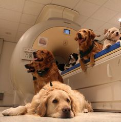 Your Dog Can Understand Vocabulary, And Your Tone Of Voice   Popular Science