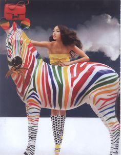 Multi color zebra