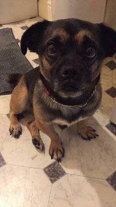 LOST DOG: 06/10/2017 - Huddersfield, West Yorkshire, England, United Kingdom. Ref#: L37539 - #CritterAlert #LostPet #LostDog #MissingDog