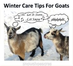 Tips for keeping goats & newborns warm & healthy…