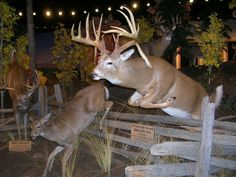 - Check it. Deer Decor, Deer Hunting Decor, Trophy Display, Hunting Guns, Hunting Stuff, Taxidermy Display, Deer Mounts, Deer Pictures, Trophy Rooms