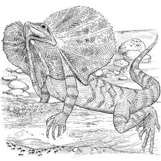 lizard coloring page