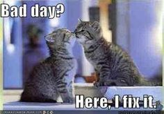 Cute Kittens and Funny lol Cats