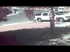 Hero Cat Saves Boy from Attacking Dog