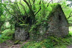 green Irland